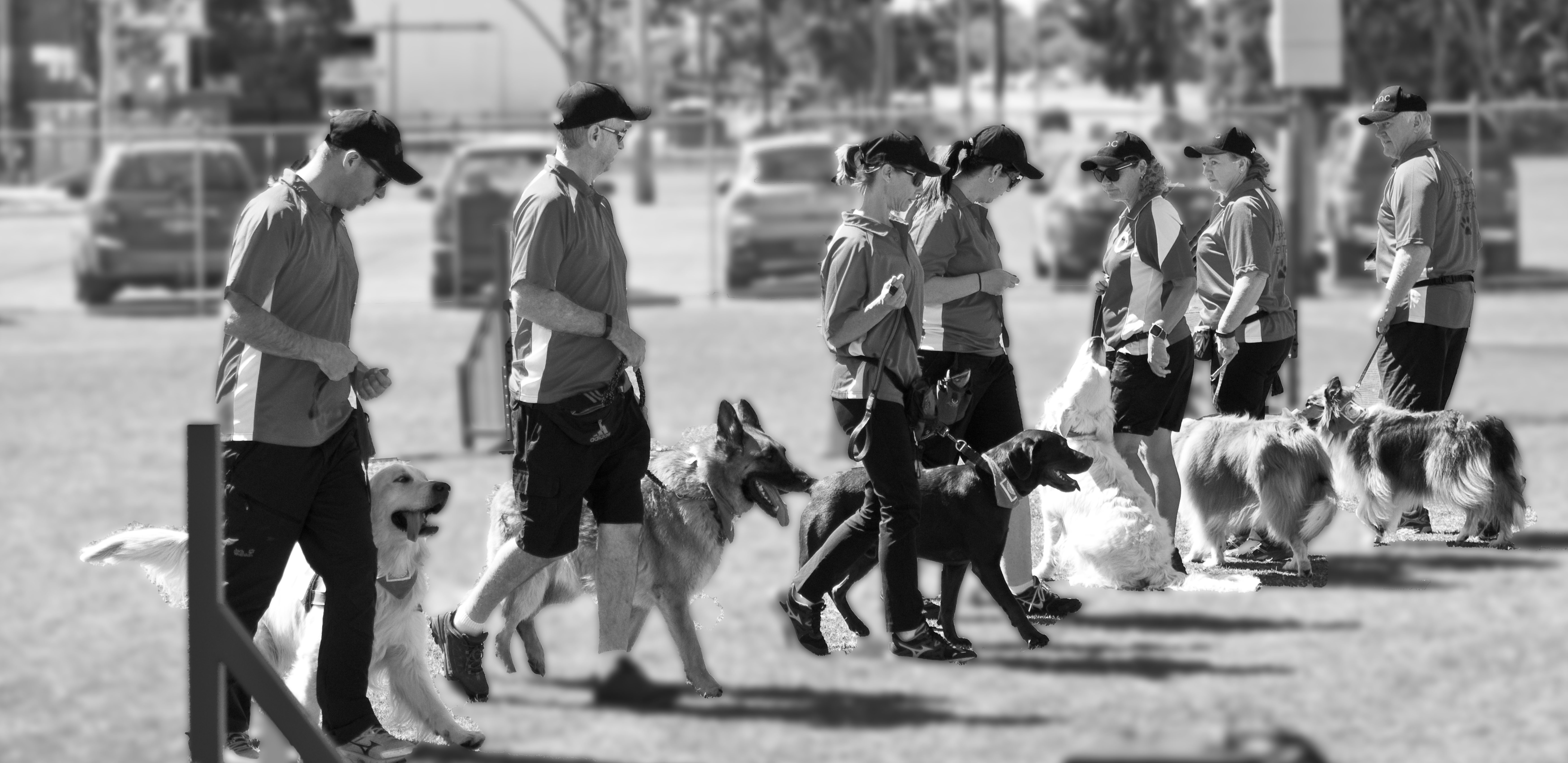 obedience trainging group